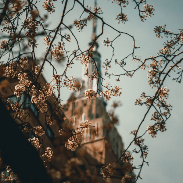 New York City - Blick auf das Empire State Building hinter einem Kirschblütenbaum